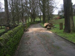 Drive with fallen tree