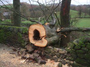 Tree trunk having been sawn through.